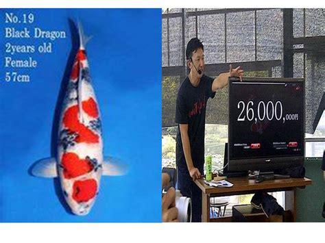 Bibit Ikan Koi Bandung ikan koi termahal terjual seharga rp 2 68 milyar