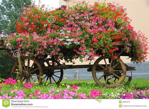 imagenes de jardines con geranios los geranios rojos florecen en un florero en el jard 237 n