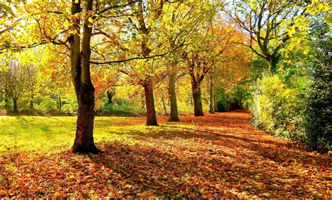 autumn forest trees road landscape  wallpaper