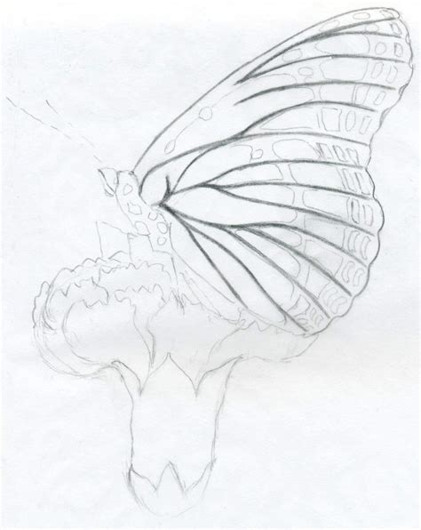 Sketches To Trace by Butterfly Pencil Drawings You Can Practice