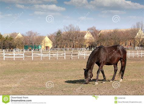 horse corral stock photos horse corral stock images alamy horse in corral stock photo image 24292190