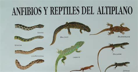 insectos anfibios y reptiles anida anfibios y reptiles del altiplano
