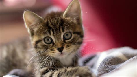 cute kittens wallpapers hd