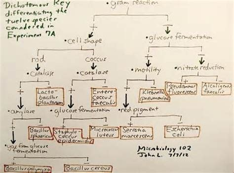 microbiology unknown lab flowchart 44 best microbiology images on microbiology
