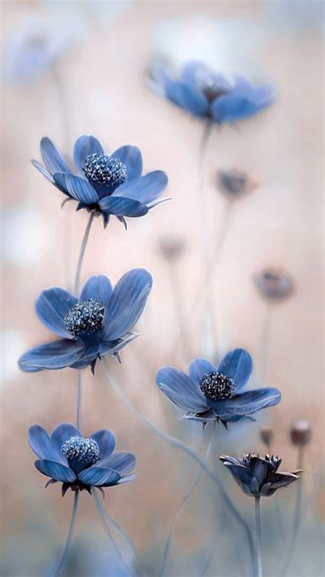 blue flowers hd mobile wallpaper vactual papers