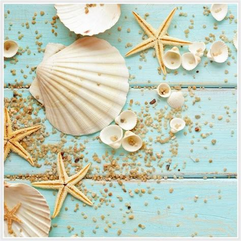 imagenes vintage mar 8 best images about estrellas y caracolas de mar