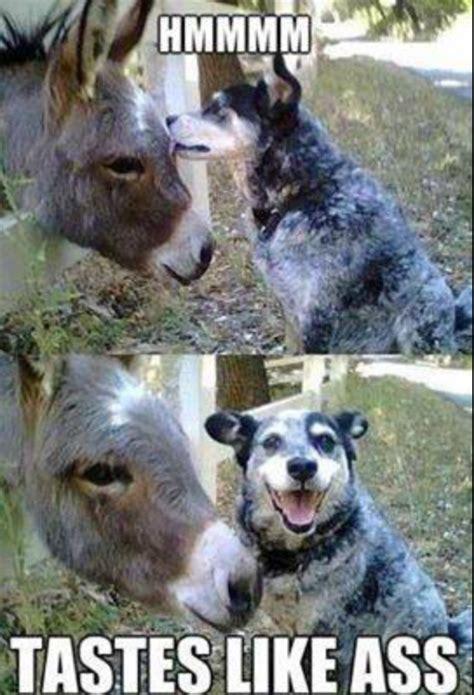 funny dog and donkey meme