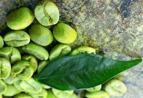 Biji Kopi Hijau 7 khasiat terbaik kopi hijau untuk kesehatan