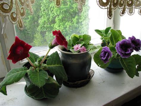 pianta da interno poca luce piante fiorite da interno poca luce semplice e comfort