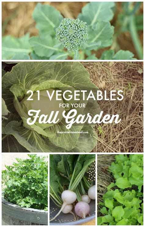 when to plant a fall garden vegetables to plant in fall garden great tips and ideas