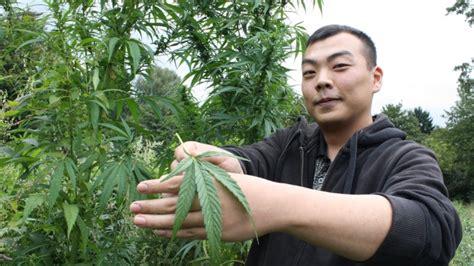 wann wird cannabis legalisiert hilfe f 252 r krebskranke cannabis club osnabr 252 ck will droge