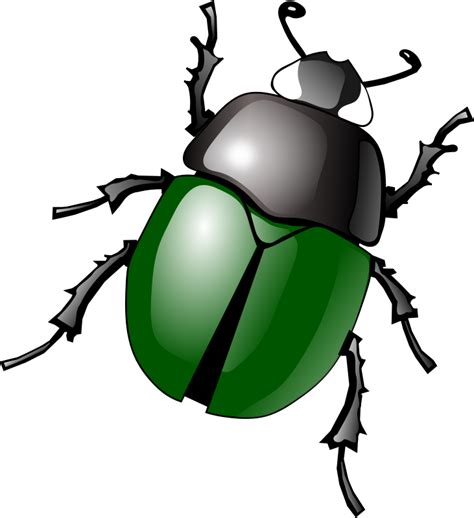 clipart for free beetle cliparts