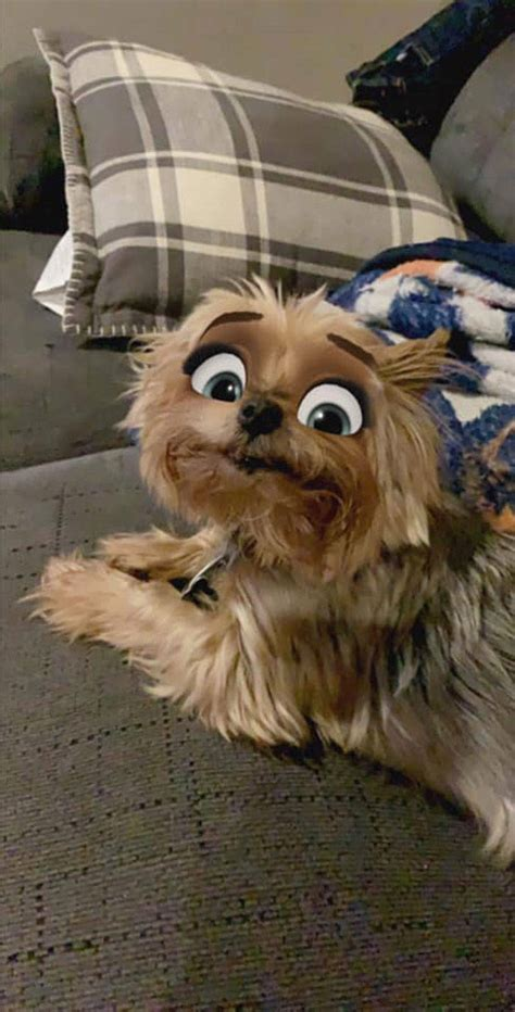 snapchat filter  turn  dog   disney