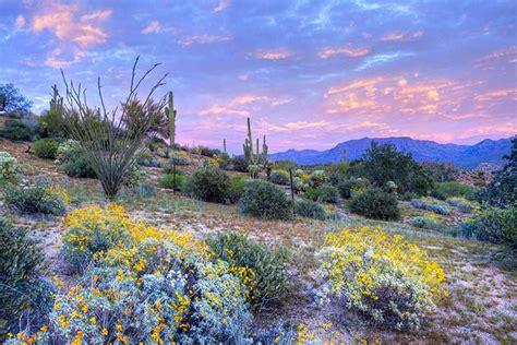 california desert flowers water conservation gardening desertusa