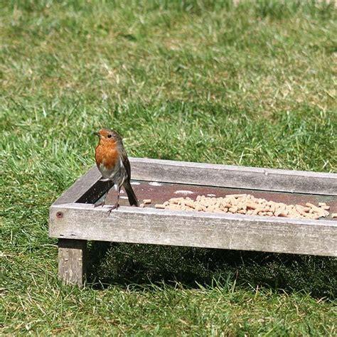 ground feeding tray