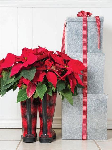 decorating with poinsettias hgtv