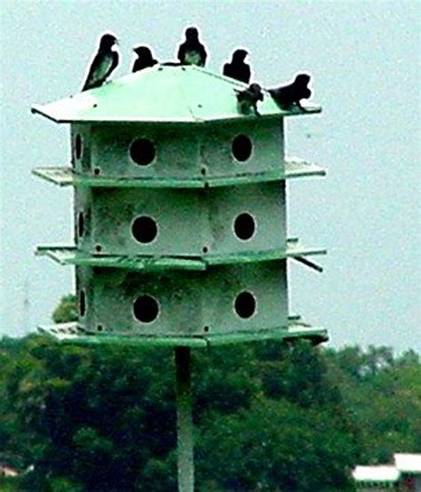 Purple Martin House by Purple Martin Bird Houses For Sale Plans