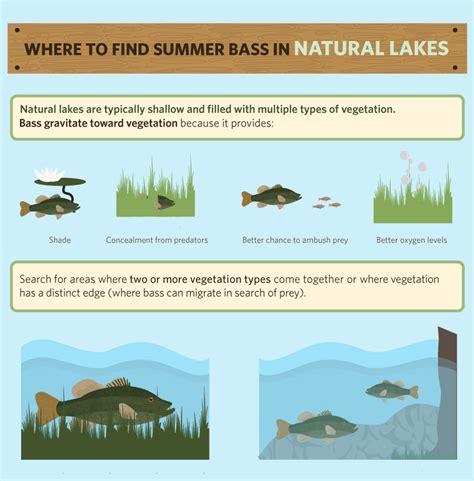 bass fishing a beginners guide to bass fishing books summer bass 101 salmon