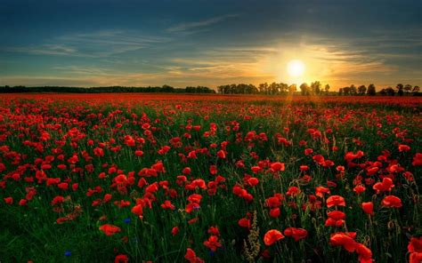 wallpaper flower field field of flowers wallpapers hd wallpapers 1080p desktop