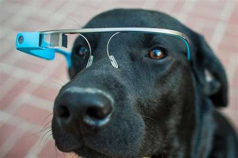 new technology for dogs tech infused pet glasses google glass for dogs
