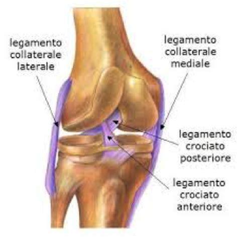 dolore ginocchio interno anteriore legamenti collaterali ginocchio dott marco griffoni