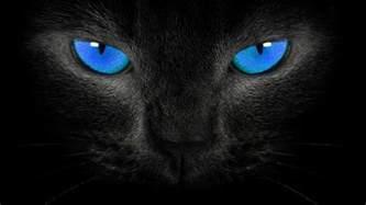 pics photos pc image black cat blue eyes wallpaper pc
