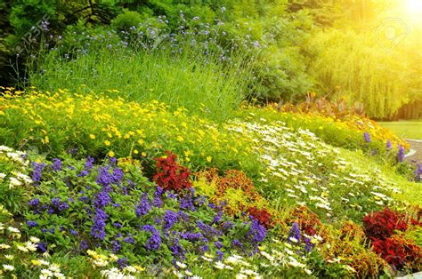 Scenery Nature Sunset Flowers Blue Fields Flower Garden Flower Garden Scenery
