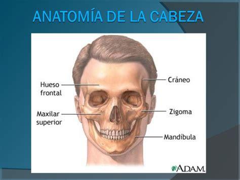 material didactico utilizado anatom 237 a de la cabeza
