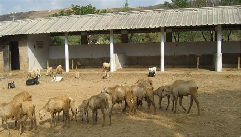 dog housing image gallery sheep housing