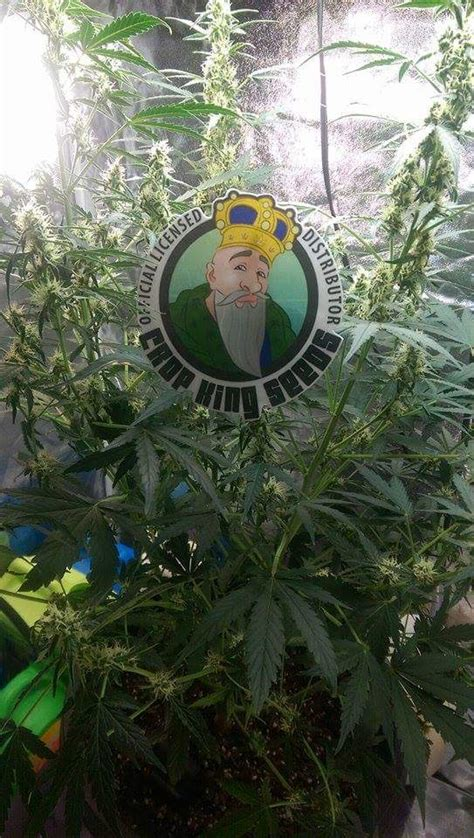 northern lights auto supply toke it to the grave themed crop king photo