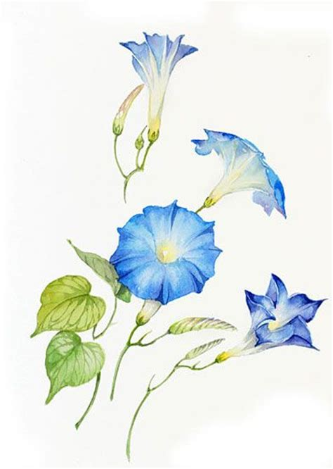 acquarelli fiori 64 best images about tuninetti on