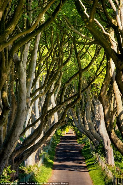 tree biography in english the long long life of trees examines the history between
