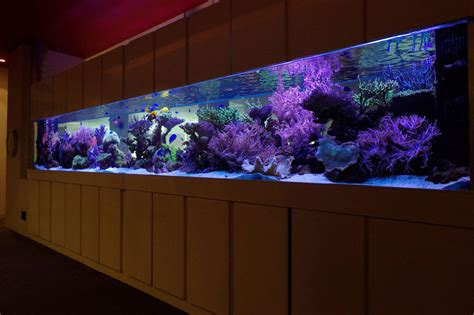aquarium design centre aquatic design centre