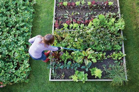 Free Gardening Tips Garden Idea Free Gardening Tips Free Vegetable Gardens For Beginners