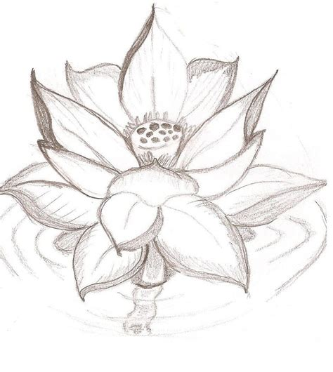 lotus flower drawing images lotus flower sketch drawing www imgkid the image
