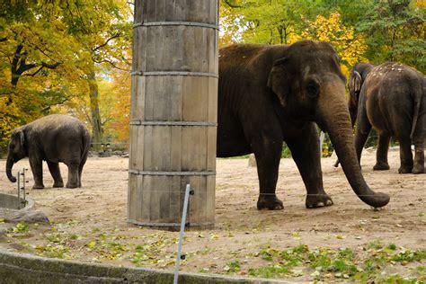 zoologischer garten zoo bezoek de berlijnse dierentuin zoologischer garten