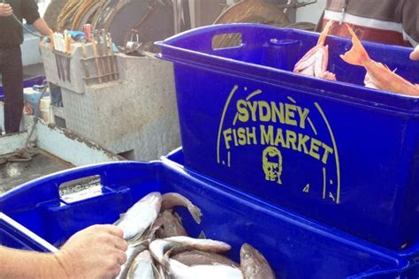 commercial fishing boat and licence for sale nsw id sol01 wanted to buy nsw fishing business seavine marine