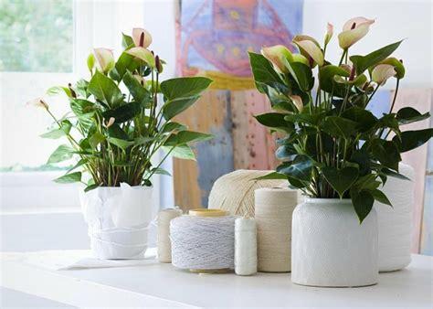 Schöne Pflegeleichte Zimmerpflanzen by Sch 246 Ne Zimmerpflanzen Moderne Pflegeleichte Topfpflanzen