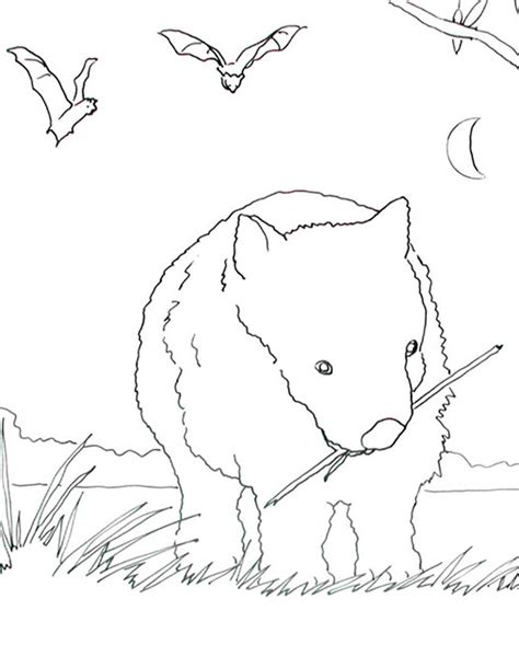 Caroline Arnold Art And Books Wombat Coloring Page Wombat Coloring Page