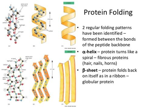 2 protein functions protein structure function