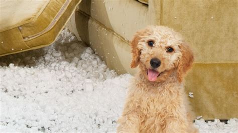 stinky puppy bad animal planet