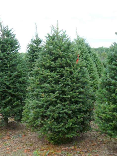 artificial balsam christmas trees