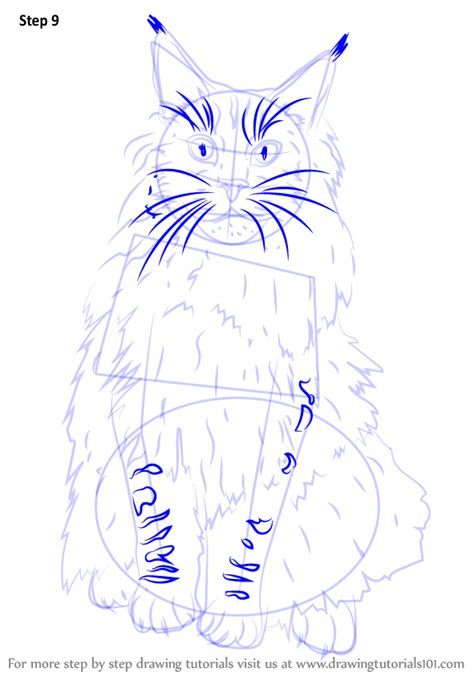 how to a coon step by step how to draw a maine coon drawingtutorials101