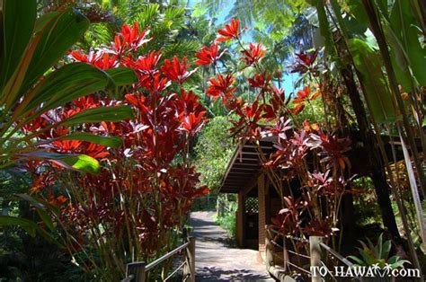 Botanical Gardens Hawaii Hawaii Tropical Botanical Garden Heavenly Hawaii Pinterest