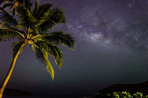 picture stars milky  nature sky palm trees night time