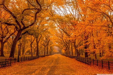 the world s best photos of autumn and woodlands flickr hive mind beautiful autumn landscapes of the world 4k hd desktop wallpaper for 4k ultra hd tv wide