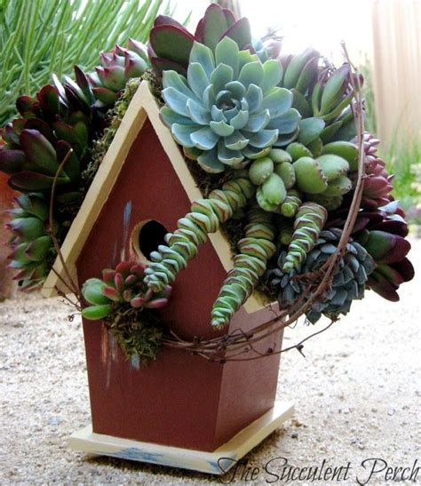 succulent house 47 succulent planting ideas with tutorials succulent