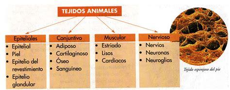 imagenes tejidos animales conozcamos la importancia del tejido animal y vegetal