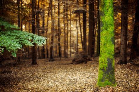 imagenes de bosques increibles 25 fotos de bosques para que desempolves la c 225 mara