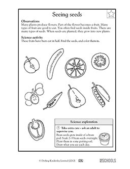 Science Worksheets For 1st Grade by 1st Grade 2nd Grade Kindergarten Science Worksheets All